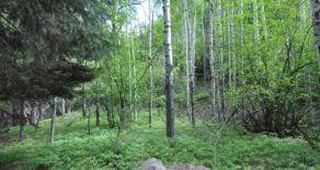 Lush 2.98 acres in Idlewild