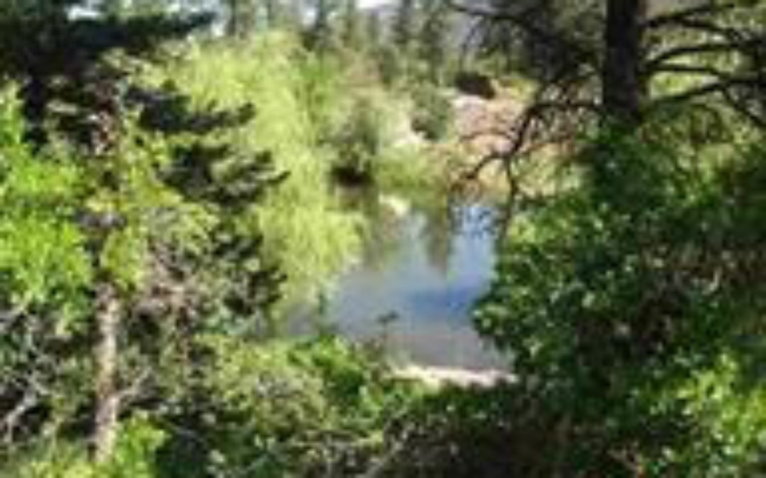 Secluded Lot in Idlewild